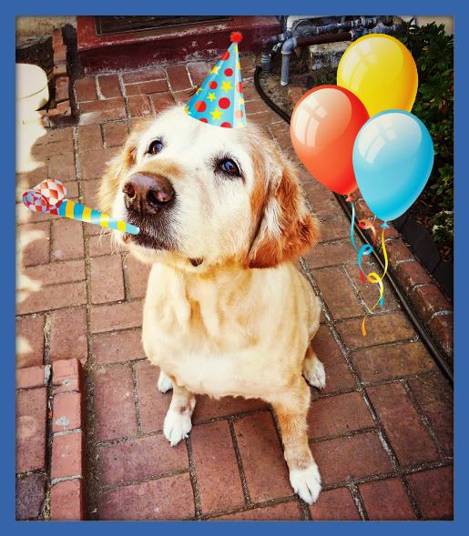 Happy Birthday Sadie Sharell S Pet Sitting And Portraits